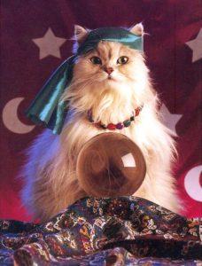 猫の占い師